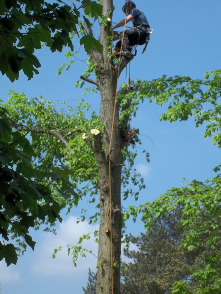 We carry out all types of tree work